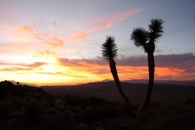 Joshua Tree (Oct 2009)