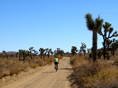 Dave riding between the Joshua trees