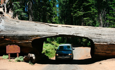Sequoia National Park (07/2007)