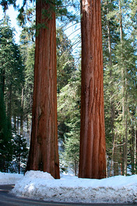 2 sequoias. Pour des info en francais:  http://www.usa-decouverte.com/ouest/californie/sequoia_national_park.html