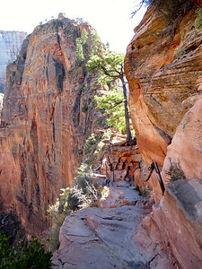 Trail to Angel's Landing