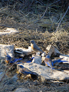 Birds having a drink at Stave Spring