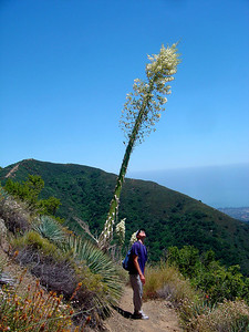 Hiking in the hills in the springtime http://santabarbarahikes.com/ http://www.sb-outdoors.org/