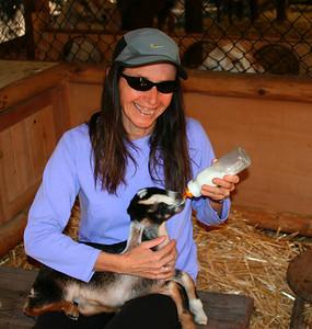 Goats in Montecito (02/2008)
