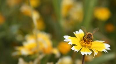 22 bee