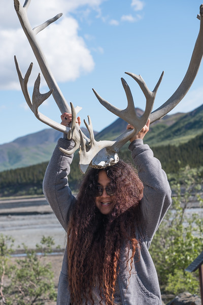 Almost extinct, an extremely rare sighting of a Denali Horny Tourist in Denali National Park, Alaska.