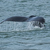 Whale Fluke, Auke Bay, Juneau, Alaska.