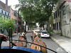 Taking a horse carriage ride through the streets of Historic Charleston.
