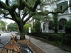 Touring beautiful period homes by horse carriage in Charleston's Historic District.