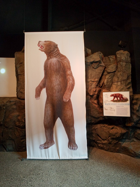 Columbia Gorge wildlife depicted at the Discovery Center.
