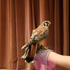 Disabled winged predators cared for at the Discovery Center.