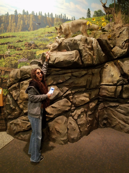 Tourist hunting a wolf at the Columbia Gorge Discovery Center.