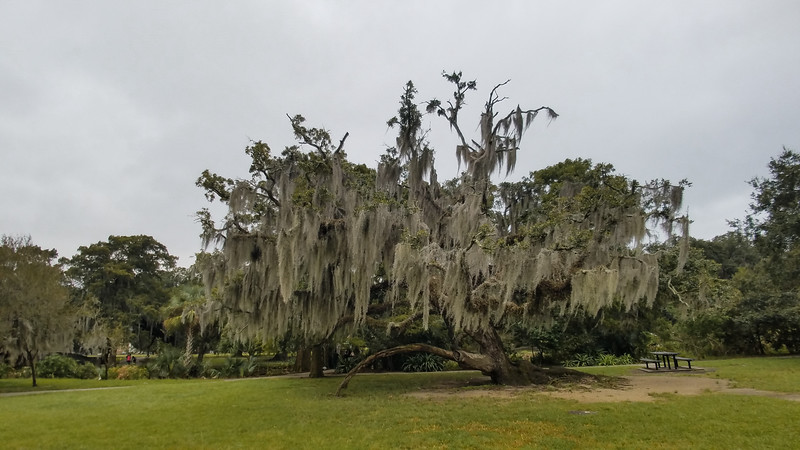 Magnificent old tree in City Park, New Orleans, Louisiana.