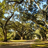 The grounds of Rosedown Plantation in Baton Rouge, Louisiana.
