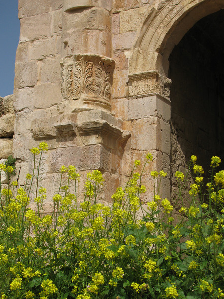 A holiday in Jordan and Syria among stones and flowers