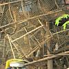 Migratory fish traps