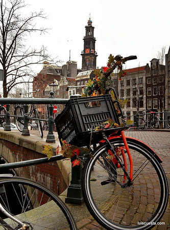Amsterdam - bike basket and leaves