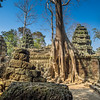 root trees take over the ruins of World's Heritage Ta Prohm - Angkor Wat Bayon Style temple in Cambodia