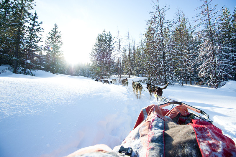 Dog Sledding - Near Yellowstone National park
