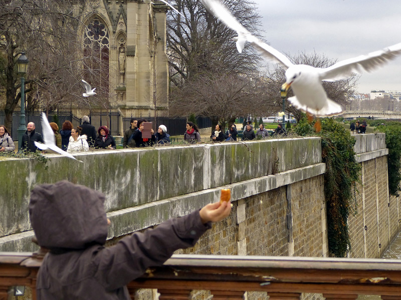 Paris - boy feeding seagull