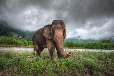 Curiosity - (Elephant Nature Park, Thailand)