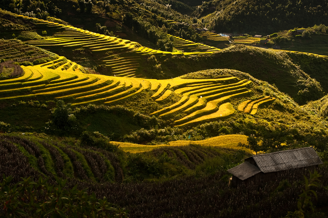 Race fields of Sapa Vietnam.
