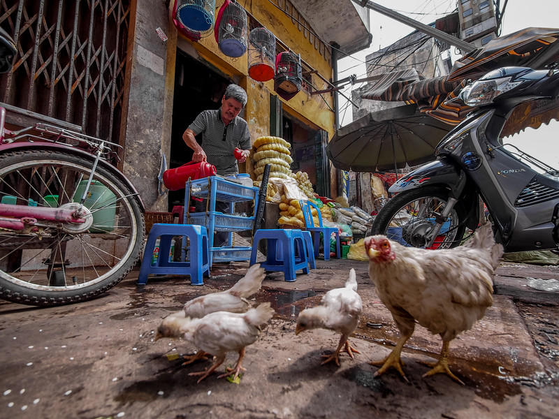 chicken street life