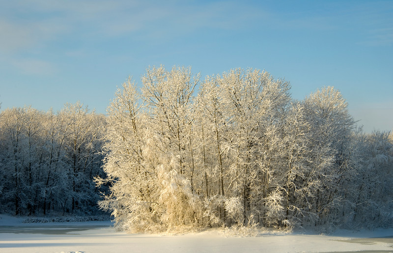 Morning snow on trees in Mayberry State Park, Novi, Michigan  Copyright - W. Keith Baum | PhotoCanal.com