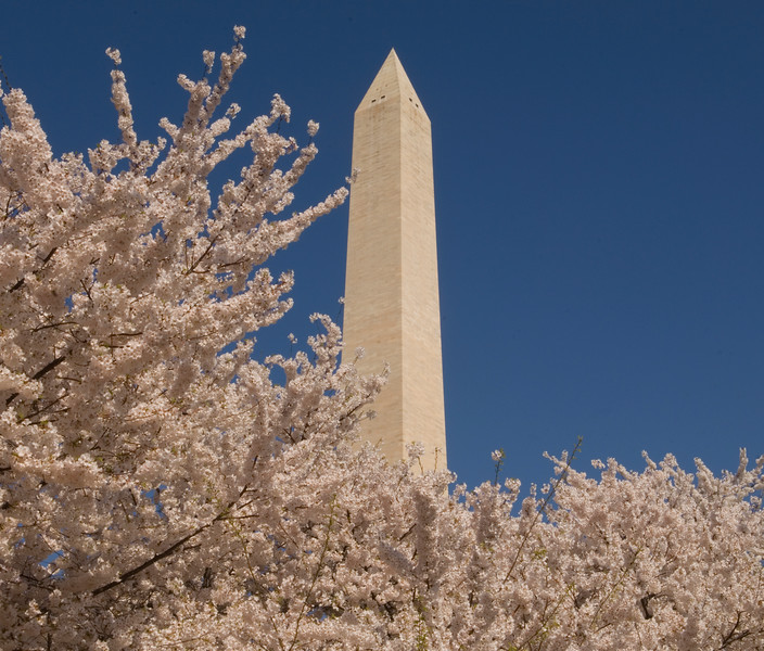 Washington Monument and Cherry Blossoms, Washington, D.C., USA  Copyright - W. Keith Baum | PhotoCanal.com