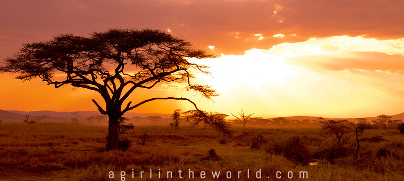 East African Safari: Zambia, Malawi, Tanzania, Kenya