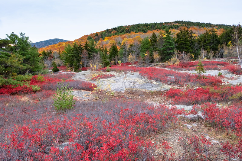 "<big>2019-10: autumn, Acadia</big> <br><br>A visit to Acadia National Park in late October fed my need for both autumn color and for Downeast Maine. <br><br>My journal for this trip lives as entries within my blog. Click to read the <a href=""https://denisegoldberg.blogspot.com/search/label/Acadia%202019-10""><b>TRIP-SPECIFIC BLOG ENTRIES</b></a>.  <br><br>Click to visit the <a href=""/Travel/Acadia-October-2019/Autumn-Acadia/""><b>PHOTO GALLERY</b></a> from this trip."