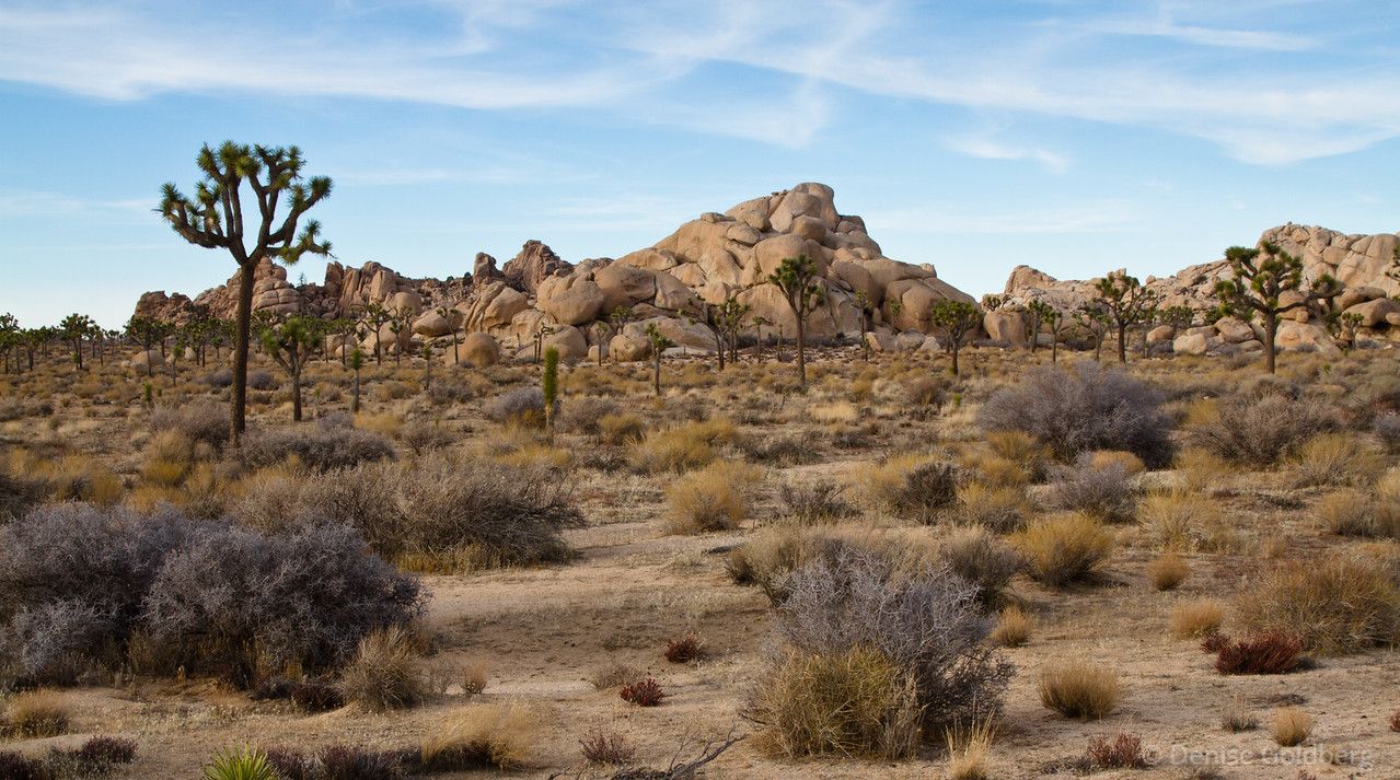 """<big>2012-01: California's southeastern corner</big> <br/><br/>This trip was my first visit to the southeastern corner of California, with wanders in Joshua Tree National Park and around the Salton Sea.  <br/><br/> My journal for this trip lives as entries within my blog. Click to read the <a href=""""http://denisegoldberg.blogspot.com/search/label/California%202012-01""""><b>TRIP-SPECIFIC BLOG ENTRIES</b></a> or my full <a href=""""http://denisegoldberg.blogspot.com""""><b>BLOG</b></a>.  <br/><br/> Click to visit the <a href=""""/Travel/California-2012-01""""><b>PHOTO GALLERIES</b></a> from this trip."""