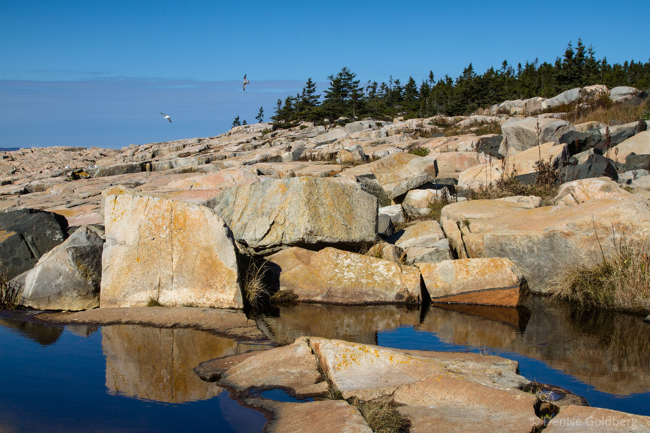 """<big>2014-10: images of autumn, Acadia</big> <br><br>It was time for my late autumn visit to Acadia National Park. I'm always happy to wander there... it's a good kind of addiction!<br><br>My journal for this trip lives as entries within my blog. Click to read the <a href=""""http://denisegoldberg.blogspot.com/search/label/Acadia%202014-10""""><b>TRIP-SPECIFIC BLOG ENTRIES</b></a>.  <br><br>Click to visit the full <a href=""""/Travel/Acadia-2014-10/Images-Autumn-Acadia-2014/""""><b>PHOTO GALLERY</b></a> from this trip."""
