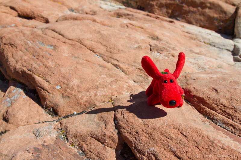 """<big>2008-06: Red rocks glowing</big> <br/><br/> My ever-present wanderlust will be somewhat satisfied by a late spring long weekend escape to Zion National Park. <br/><br/> Since Rover <i>(yes, Rover is the little red dog in the photo! Can't your mascots write?)</i> has volunteered to write the journal for this adventure, I thought a picture of him would be perfect here.<br><br> Click to visit my <a href=""""http://denisegoldberg2008zion.blogspot.com/""""><b>journal</b></a> or <a href=""""/gallery/5150568_h2Y9P""""><b>photo galleries</b></a> from this trip."""
