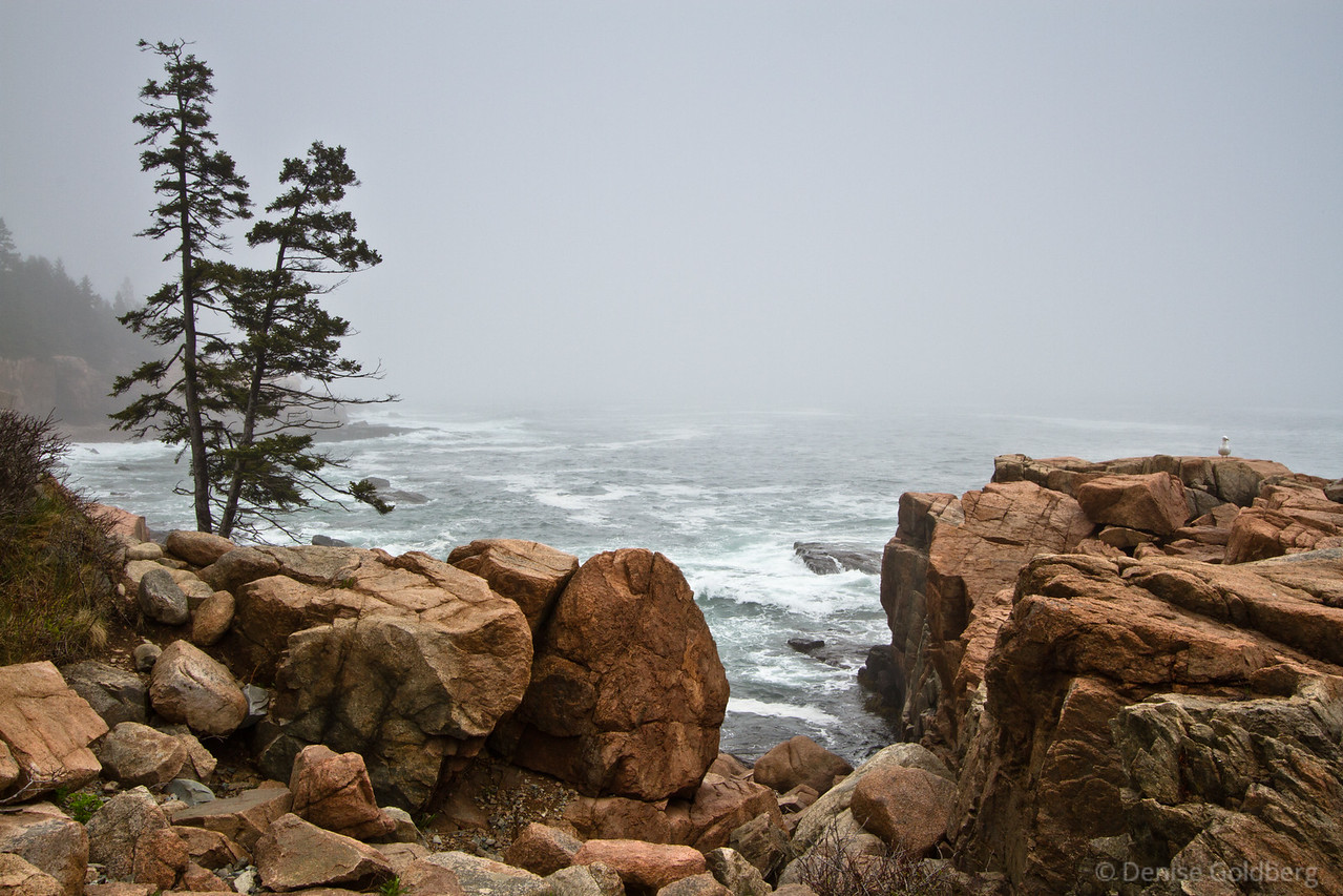 "<big>2013-05: Acadia and...</big> <br/><br/>It was early May, time to satisfy a desire to wander in Acadia National Park. The weather wizard sent gray days, still beautiful.  <br/><br/>My journal for this trip lives as entries within my blog. Click to read the <a href=""http://denisegoldberg.blogspot.com/search/label/Acadia%202013-05""><b>TRIP-SPECIFIC BLOG ENTRIES</b></a> or my full <a href=""http://denisegoldberg.blogspot.com""><b>BLOG</b></a>.  <br/><br/>Click to visit the full <a href=""/Travel/Acadia-and-May-2013/29627446_hhRSq4""><b>PHOTO GALLERY</b></a> from this trip."
