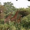 Travel;  Senegal; Bandia Reserve;