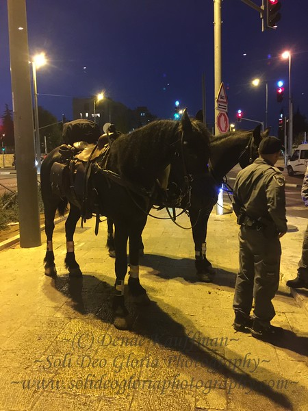 I had a wonderful conversation about horses with these young policeman when I stopped to ask for directions. These horses were huge!