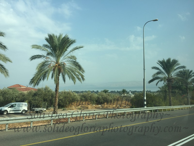 My first glimpse of the Sea of Galilee! So exciting! Notice the date palm to the left, they are just getting ready to begin harvesting the dates here in Israel.