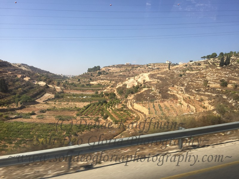 Through the hills of Bethlehem. So many lush crops as the grape harvest is just finishing here and olive harvest has begun.