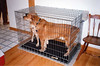IN LOCKUP<br /> The Latvokoski Home, Tolland, Connecticut<br /> <br /> Parker and Bryce even shared Bryce's kennel together without any incident whatsoever. I was totally amazed, as that's a very confined space for a big bruiser and an animated young 'un.