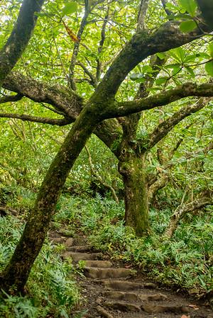 01.27.18_Pipiwai Trail-Haleakala Park