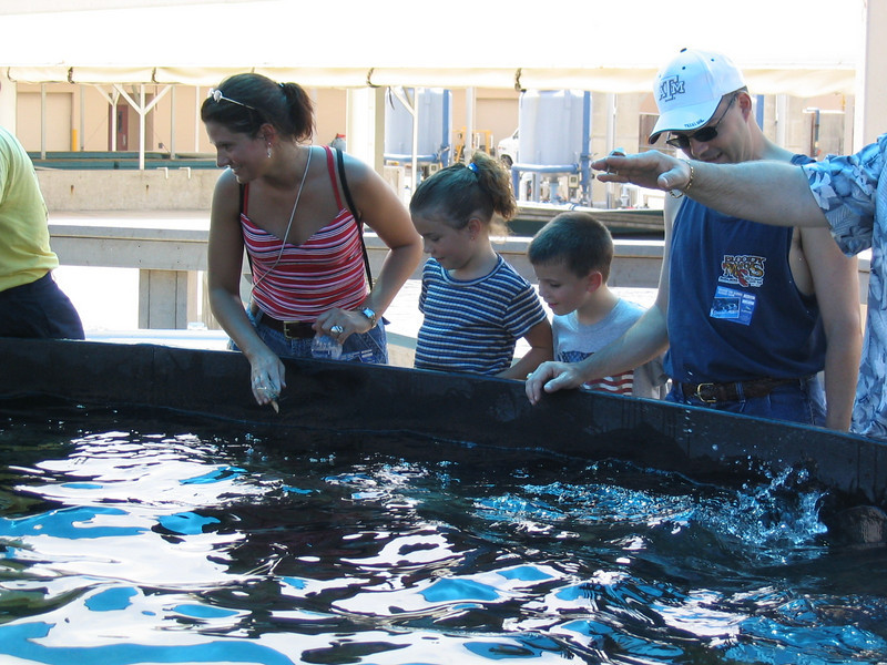 At Sea World, feeding the rays.