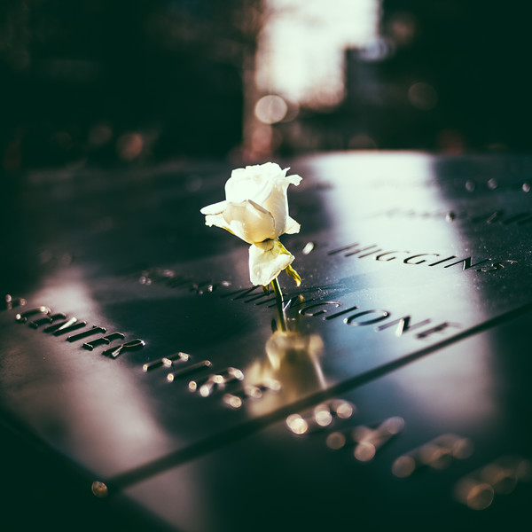 A flower left for a 9/11 victim on their birthday.