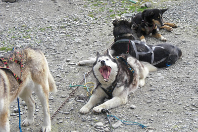 Once the dogs know they are going for a sled run, they go NUTS and bark LIKE CRAZY so loud, you CAN NOT HEAR A THING!