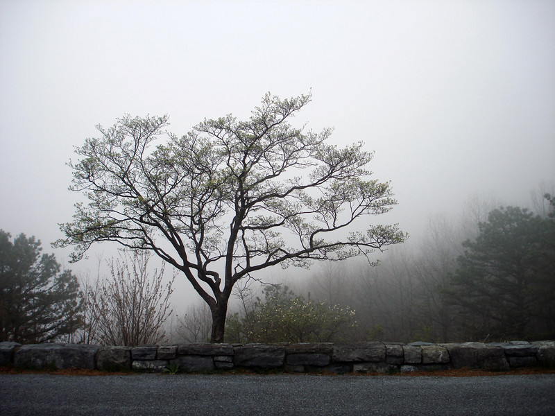 LITTLE TREE<br /> One advantage to having all this fog around is that it made this little tree stand out, as it would've gotten lost in the background otherwise.