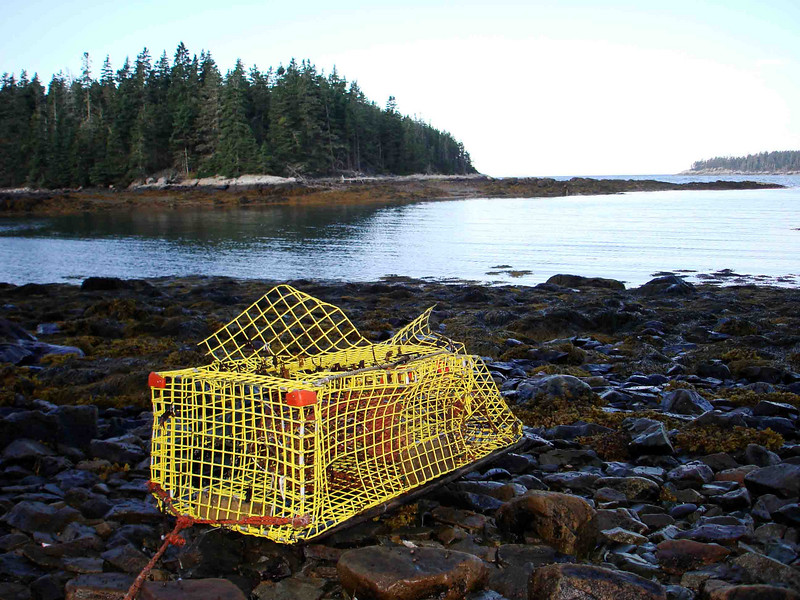SOMETHING BATTERED, SOMETHING NEW<br /> I don't recall seeing this lobster trap here before, but it was tied to the shore so it must have been. It's looking a little worse for wear.