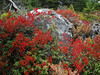 DECKED OUT IN RED<br /> See what I mean about the difference in colors? Maybe these aren't even the same species of plants, but still it amazes me how some turn and others don't.