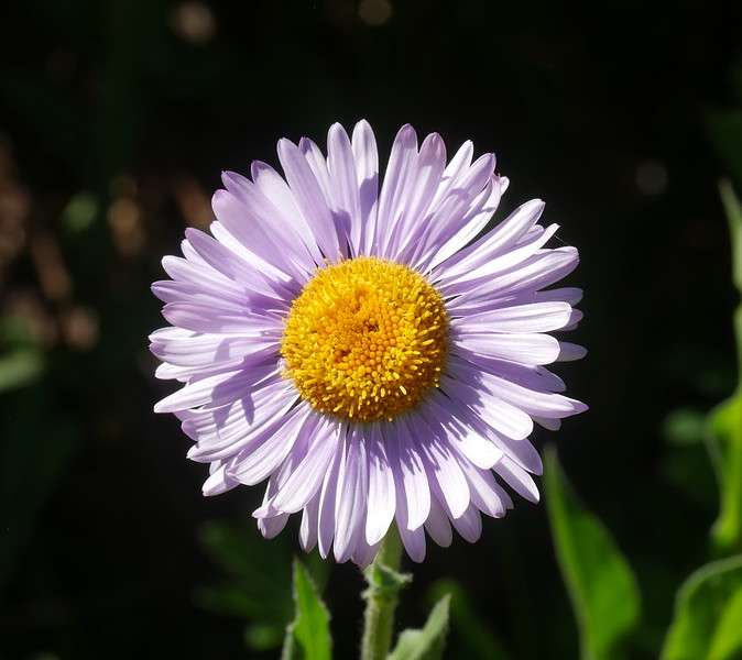 Lovely combination of light and shadow on this daisy too.