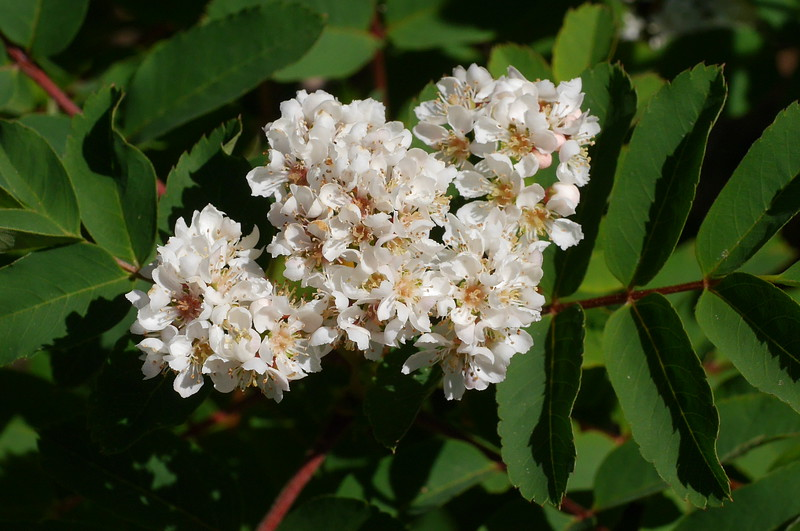 We saw a number of these shrubs along our walk.