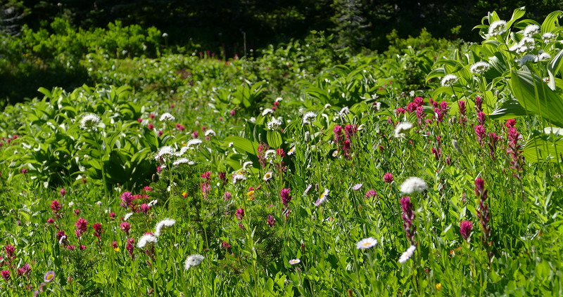 There were lush meadows of flowers everywhere we walked.